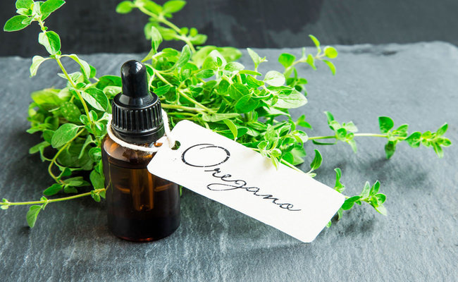 Photo of 11 Health Benefits of Oregano