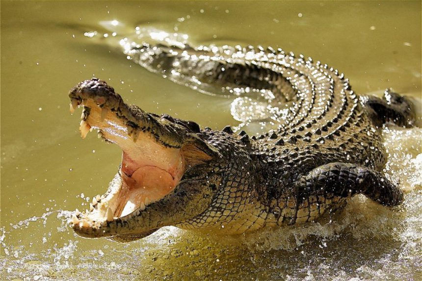 Ethiopian Pastor gets eaten by Crocodile during lake Baptism